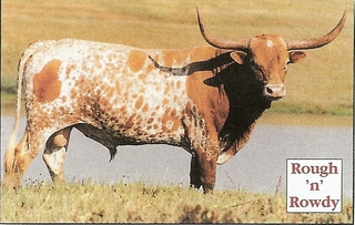 BG'S ROUGH 'N ROWDY: Texas Longhorn