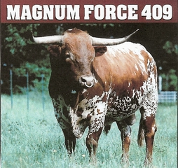 MAGNUM FORCE 409: Texas Longhorn