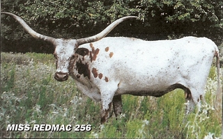 MISS REDMAC 256: Texas Longhorn