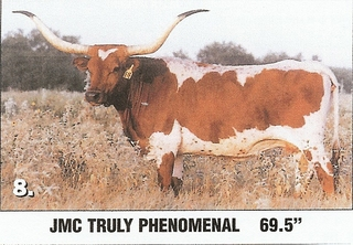 JMC TRULY PHENOMENAL: Texas Longhorn