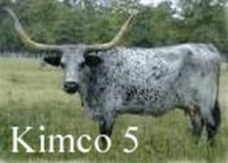KIMCO 5: Texas Longhorn