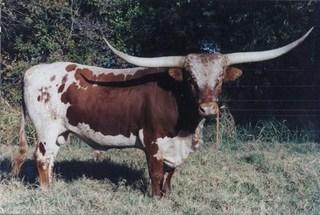 COACH   : Texas Longhorn